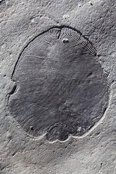 cholesterol s molecular fossil identifies earth s oldest