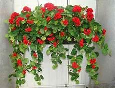 künstliche blumen für draußen balkonblumen k 252 nstlich kunstpflanze de