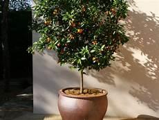 arbre fruitier en pot fruitier nain le choisir et l entretenir