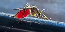 was hilft gegen mückenstiche was hilft gegen m 252 ckenstiche