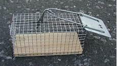 Lebendfalle Maus Einseitig 5 X 5 X 12 Cm Tierfalle De