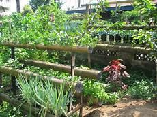 Desain Taman Apotik Hidup Kumpulan Desain Rumah