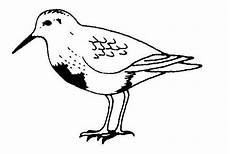turpial dibujo para colorear pajaro turpial para colorear bird coloring pages cute coloring pages coloring pages