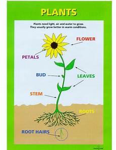 plants lesson ks1 13726 parts of a plant by spl5fm teaching resources tes