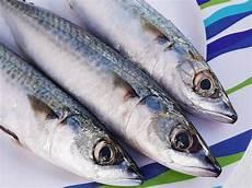 Gambar Ikan Makarel Segar Dan Jadi Sarden Kaleng