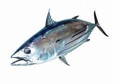 Abon Ikan Tuna Quot Alam Biruku Quot Gurih Dan Lezat Jual Abon