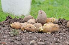 wann ist der beste zeitpunkt zum pflanzen kartoffeln