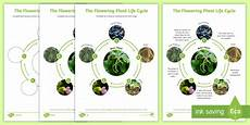 flowering plant life cycle science animals ks2 seed