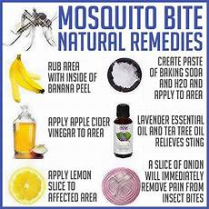 Dokiy Mosquito L Insect Physical Mosquito by Mosquito Bite Remedies Great Ideas