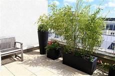 pflanzen balkon sichtschutz bambuspflanzen balkon sichtschutz blumenk 252 bel balkon