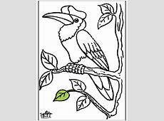 Tukane   Ausmalbilder Vögel