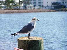 Seagull Apartments Ks by Punta Gorda Fl A Seagull At Fisherman S In
