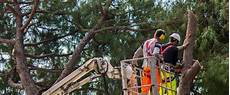 devis elagage arbre prix abattage arbre quel tarif pour abattre un arbre