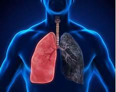 voile au poumon le t 233 l 233 gramme sant 233 des antioxydants contre le cancer