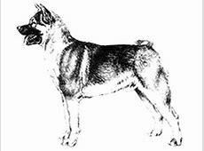Breed Standards   Australian National Kennel Council