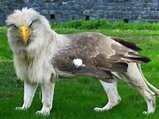 animal en g 30218 mi amigo el photoshop animales mitologicos