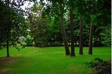 5 Fast Growing Shade Trees Arbor Hill Trees Omaha