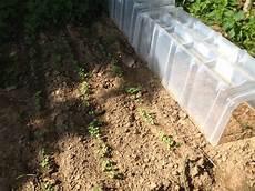 quoi semer et planter au mois de f 233 vrier au jardin potager