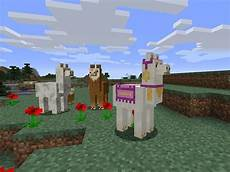 the angry llama minecraft story overdue llamas will be added to minecraft in the next