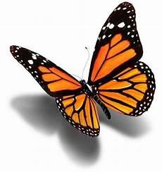 Schmetterling 3d - wolfs temporary tattoos piercings butterfly