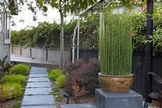 grande jardinière pour bambou bambou en pot brise vue naturel et d 233 co sur la terrasse