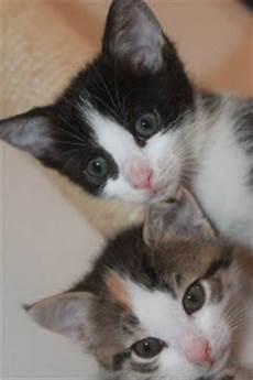 katzen wurmkur kaufen katzengeschichte gespendet der katzenhilfe graz