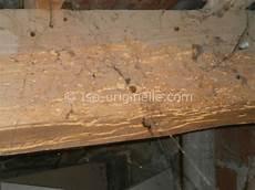traitement capricorne prix traitement capricorne charpente traitement charpente bois