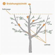 Obstbaumschnitt Eine Anleitung Mit Bildern