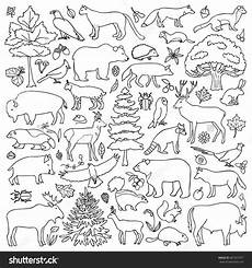 rainforest animals coloring pages preschool 17131 forest animal coloring pages through the thousand photographs on the about forest