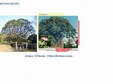 imagenes de los simbolos naturales del estado guarico simbolos patrios naturales