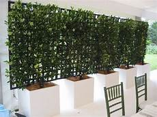 Espalier Screen Great Way To Block Afternoon Sun And