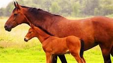 animaux de la ferme les animaux de la ferme le cheval