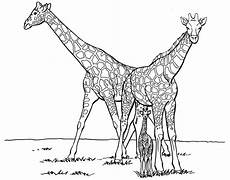 Ausmalbilder Kostenlos Ausdrucken Giraffe Giraffen Bilder Zum Ausdrucken 1041 Malvorlage Giraffe