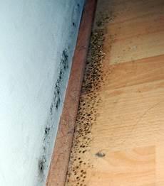 teppich unter laminat hilfe schimmel putzen reinigen