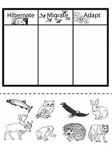 animal migration esl worksheets 14297 hibernate migrate or adapt an animal sort by my inside shoes tpt