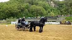 cavallo con carrozza esibizione cavalli frisoni con carrozza festa s pio