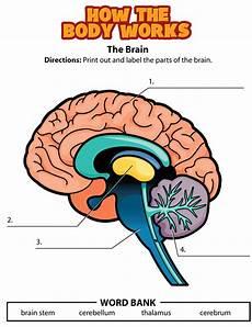 the brain worksheet kidshealth org the brain for kids human activities nervous system