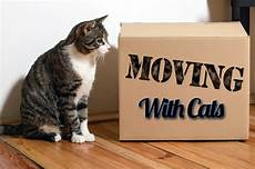 moving with cats the secret is planning ahead feline