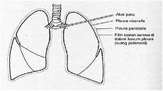 Anatomi Dan Fisiologi Alat Pernapasan Realitas Kesehatan