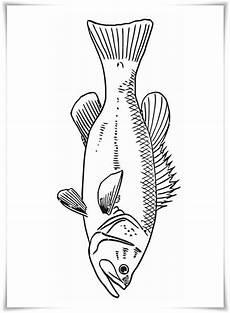 Fisch Bilder Zum Ausmalen Und Ausdrucken Kostenlos Ausmalbilder Zum Ausdrucken Ausmalbilder Fische
