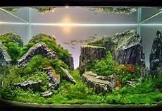 amano aquascape jenis jenis tema pada aquascape dunia akuarium