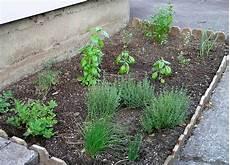 herbes aromatiques faites vous ces 12 erreurs