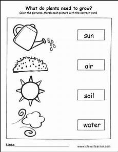 kinds of plants worksheets for grade 1 13700 what do plants need to grow activity worksheet for children plants kindergarten plants worksheets