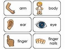 parts of my body printable flashcards preschool health