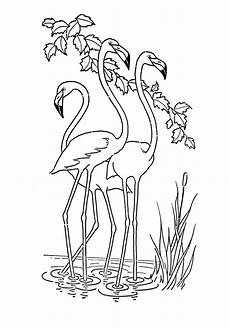 11 best flamingo coloring pages for free coloringdoo