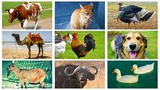 was sind haustiere farm animal sounds and pictures for toddlers learn about