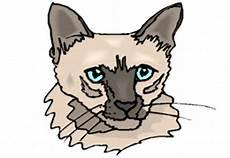 Malvorlagen Katzenkopf Malvorlagen Katzenkopf Kostenlos