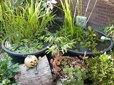 wasserpflanzen teichpflanzen und seerosen f 252 r den