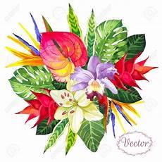 bouquet de fleurs exotiques bouquet de fleurs tropicales banque d images vecteurs et