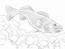 Ausmalbilder Fische Hecht Ausmalbilder Hecht Zum Ausdrucken Kostenlos F 252 R Kinder